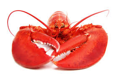 LobsterClaws.png