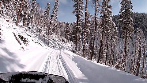 snowmobile tour fun snow forest