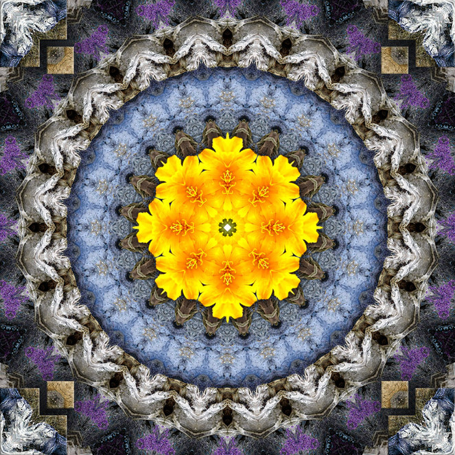 W2M - ART Lotus Seed 2017 W2 WEB.jpg