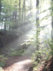 Licht_durch_Bäume.JPG
