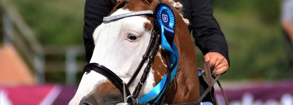 goldwyn d'embets champion 4 ans C CSO