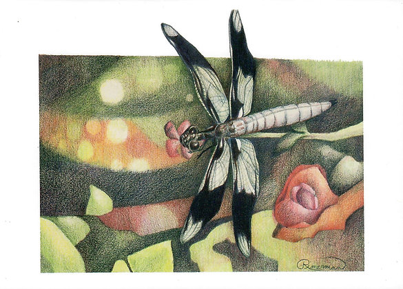 Dragonfly-card & envelope