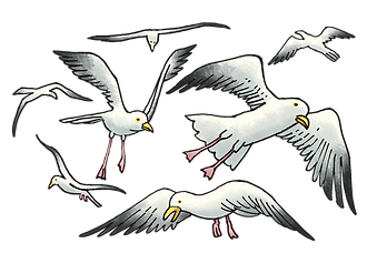big-fish-bay-seagulls-high-res.png