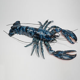blue lobster, lobster, sea creature, ocean, shore, sculpture, wall art, seashore, new england, marine sculpture, large sculpture, betsey rice, quonochontaug, rhode island artists