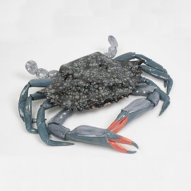 blue crab, crab, ocean, shore, sculpture, wall art, seashore, new england, marine sculpture, large sculpture, betsey rice, quonochontaug, rhode island artists, Glazed Stoneware