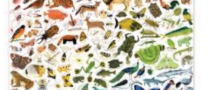 פאזל 1000 חלקים חיות בצבעי הקשת