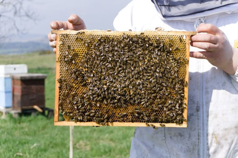 Bee-hind The Scenes With Miod Raw Honey Co: A Bee's Diet Of Pollen For Making Your Honey