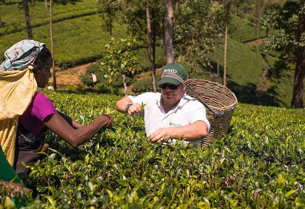 PMD Tea. Family tea company, ethically sourcing speciality single estate and single batch loose leaf tea, tea bag multipacks and exquisite tea-ware sets.  Working with tea plantations since 1945.