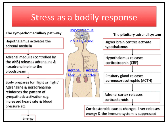 Stress as a bodily responce