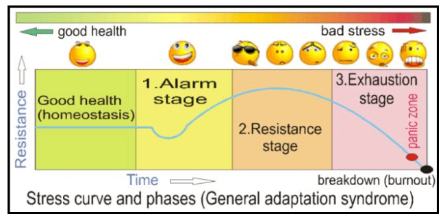 General Adaptation Syndrome Theory for Stress
