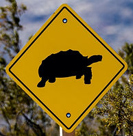 photograghy turtle sign