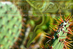 watermark cactus 1.jpg