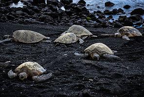 Photography turtles