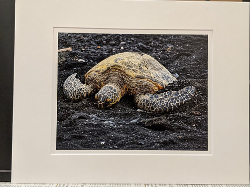 """""""Turtle No.1"""" Archival Print Bonded to White Mat Board and Backer Board"""