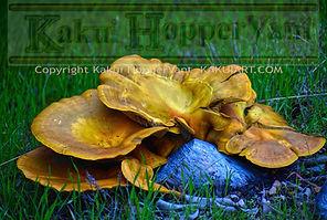 watermark fungus.jpg