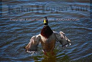 watermark duck 1.jpg