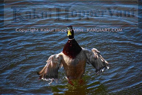Duck No.1