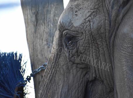 Elephants at San Diego Zoo