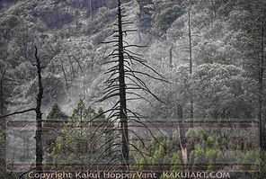 watermark rainydayfog 1.jpg