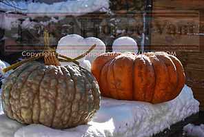 watermark pumpkin 1.jpg
