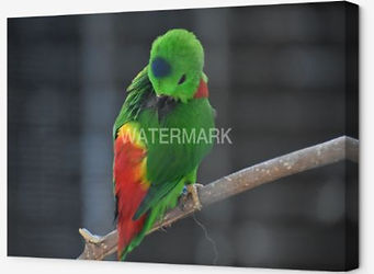 Wrapped Canvas Little Green Bird