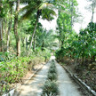 Plantation stays in coorg