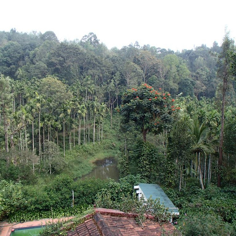 Plantatin stays in coorg