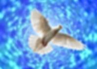 dove-4241708_1920.jpg