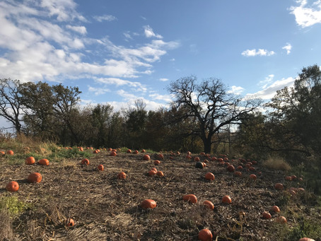 A Pumpkin Patch of Words