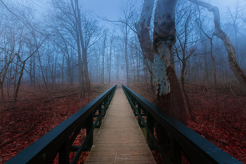 Bridge in the Enchanted Forest