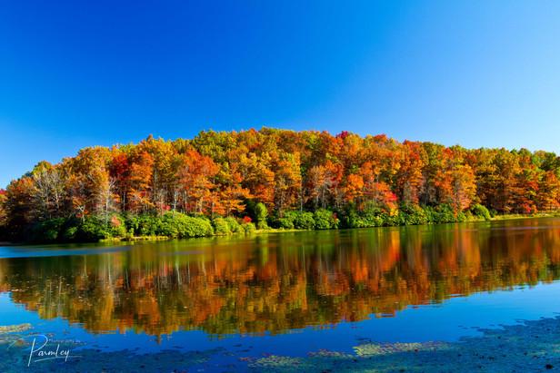 West Virgina Colors