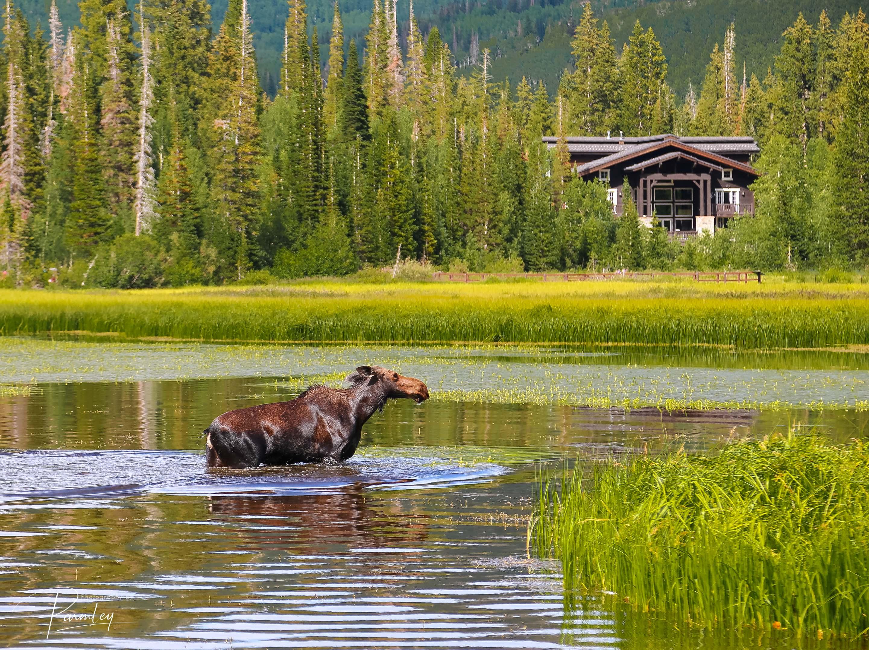 Silver Lake - Salt Lake