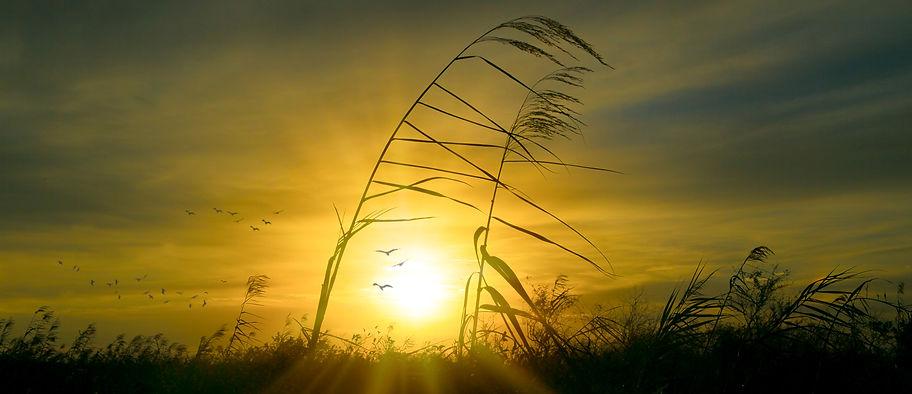 Everglades Sunrise.jpg