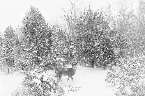 Snowy Field with Deer