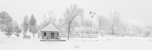 Geese over Frozen Lake