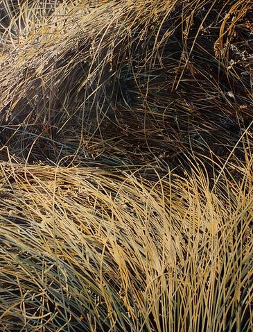 Jacques Bodin, nature, hyperrealism, hyperréalisme
