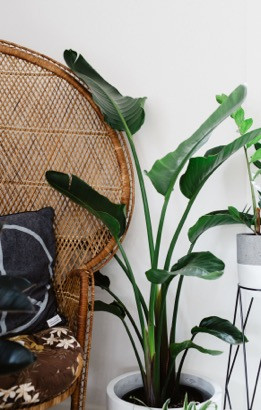 INDOOR PLANTS // THE FAVORITES