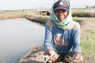 Postelsia_global_seafood_sustainability.