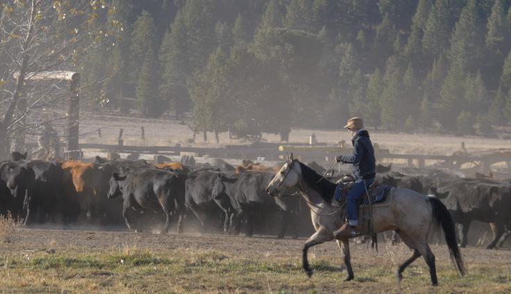 Five Dot Ranch