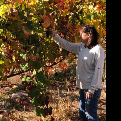 Mariah Vineyards