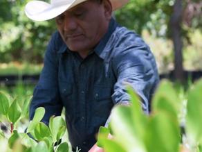 WFCF Storybit: Resendiz Brothers Protea Growers