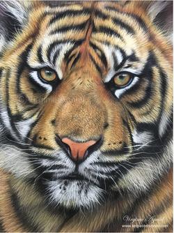 Tigre au pastel