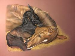 jument et son poulain