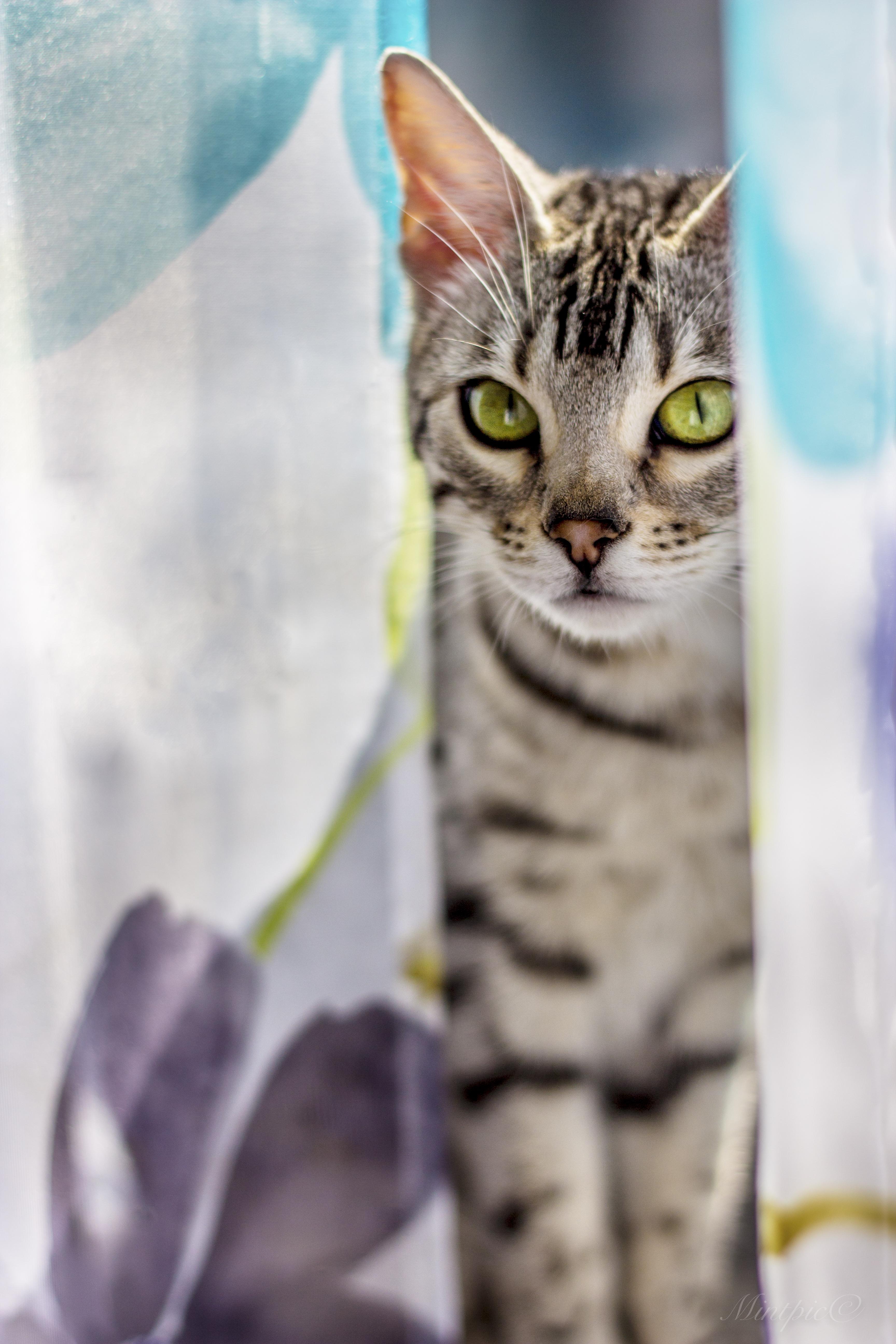 Весна 2017 кошки-23
