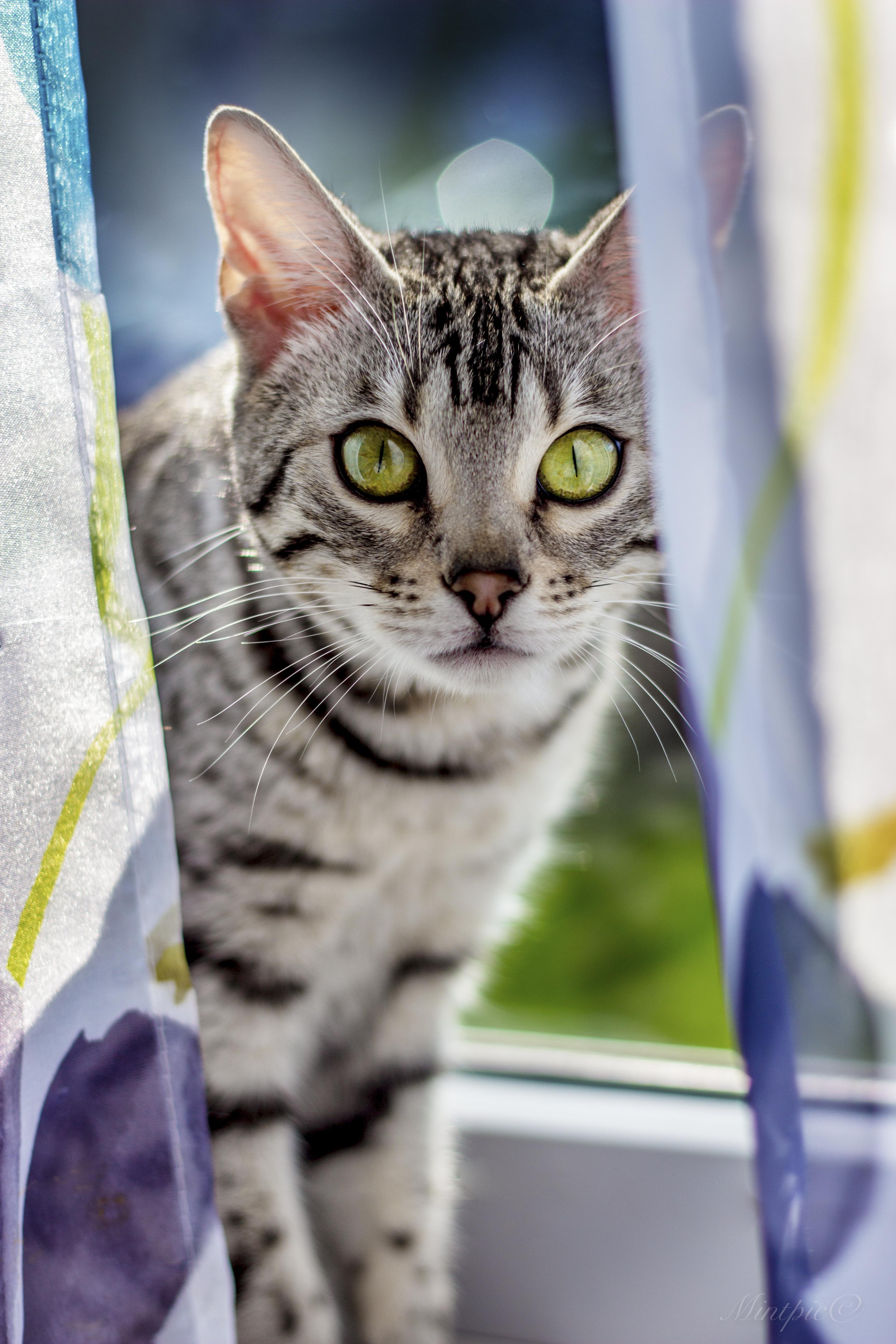 Весна 2017 кошки-19