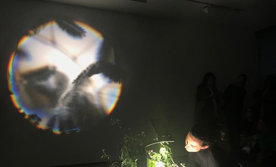 "Gaia Fugazza, ""Mimosa Pudica"", performance, 2018."