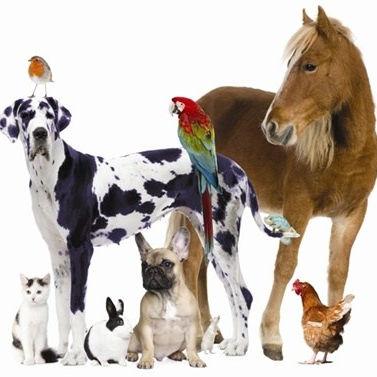 Animal Communication Phone Session
