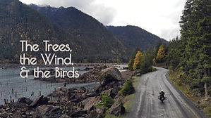 The Trees, the Wind, & the Birds