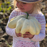 Searching For Unusual Pumpkins When Harvesting