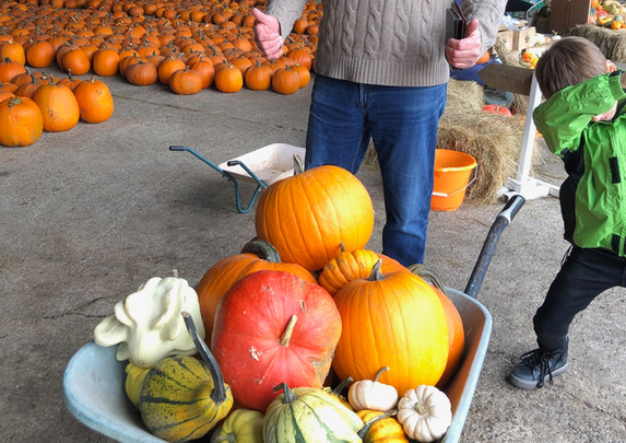 Super happy With His Pumpkins